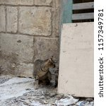 Stock photo grey cat hiding her little kitten in abandoned house street view street cat with the kitten cat 1157349781