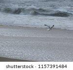 bird soaring over the ocean | Shutterstock . vector #1157391484