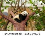 Stock photo sleeping giant panda baby 115739671