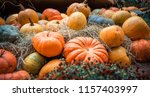 many large orange pumpkins lie... | Shutterstock . vector #1157403997