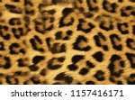 leopard wild pattern | Shutterstock .eps vector #1157416171
