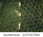 Aerial View Of Palm Trees Alon...