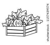 line healthy onion vegetables... | Shutterstock .eps vector #1157439574