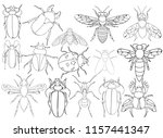 vector  isolated  insect ... | Shutterstock .eps vector #1157441347