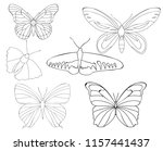 vector  isolated  insect ... | Shutterstock .eps vector #1157441437
