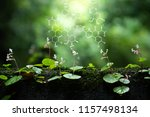 plants background with... | Shutterstock . vector #1157498134