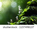 plants background with...   Shutterstock . vector #1157498137