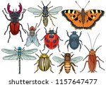 insect collection  illustration ... | Shutterstock .eps vector #1157647477