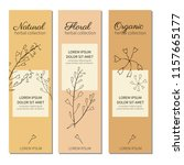 capsella flower  shepherd's... | Shutterstock .eps vector #1157665177