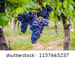 Blue Wine And Green Grape Leaf...