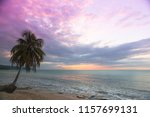 single palm tree at the beach  | Shutterstock . vector #1157699131