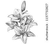 floral blooming lilies vector... | Shutterstock .eps vector #1157732827