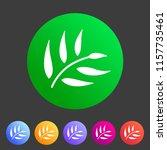 eucalyptus beauty osmetics oil... | Shutterstock .eps vector #1157735461