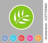 eucalyptus beauty osmetics oil... | Shutterstock .eps vector #1157735464