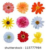 set of blooming variety flowers | Shutterstock . vector #115777984
