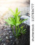 rebirth of the tree  a young...   Shutterstock . vector #1157836777