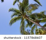 tropical palm trees on hot... | Shutterstock . vector #1157868607
