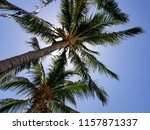 tropical palm trees on hot... | Shutterstock . vector #1157871337