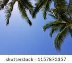 tropical palm trees on hot... | Shutterstock . vector #1157872357