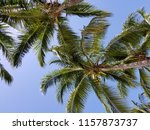 tropical palm trees on hot... | Shutterstock . vector #1157873737