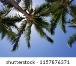 tropical palm trees on hot... | Shutterstock . vector #1157876371