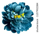 turquoise  peony flower with...   Shutterstock . vector #1157902384