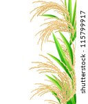 rice. spikelet of rice on a... | Shutterstock . vector #115799917