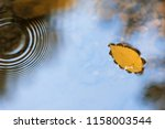 Yellow Leaf Floating On The...