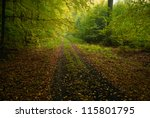 Autumn forest and road - stock photo