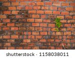 concept of hope and rebirth or...   Shutterstock . vector #1158038011