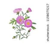 watercolor hand painted flowers.... | Shutterstock . vector #1158075217