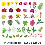 floral set. collection with... | Shutterstock .eps vector #1158112501