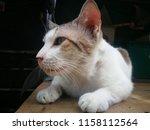 cat lying on a wooden board. | Shutterstock . vector #1158112564