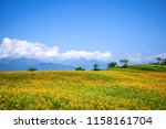 the orange daylily tawny... | Shutterstock . vector #1158161704
