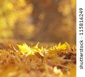 Golden Autumn Leaves On The...
