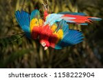 full feather display of a... | Shutterstock . vector #1158222904