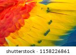 textures and colors of the... | Shutterstock . vector #1158226861