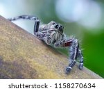 macro fauna insect | Shutterstock . vector #1158270634