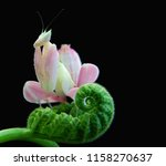 macro fauna insect | Shutterstock . vector #1158270637