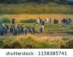 king penguins at tierra del... | Shutterstock . vector #1158385741