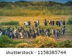 king penguins at tierra del... | Shutterstock . vector #1158385744