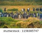 king penguins at tierra del... | Shutterstock . vector #1158385747