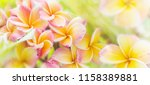 panorama of blossoming... | Shutterstock . vector #1158389881