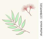 eucalyptus  blue agonis thyme... | Shutterstock .eps vector #1158449101