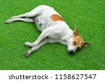 dog sleep on grass animal life | Shutterstock . vector #1158627547
