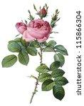 flower illustration | Shutterstock . vector #115866304