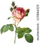 flower illustration | Shutterstock . vector #115866325