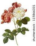 flower illustration   Shutterstock . vector #115866331