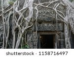 roots of giant tree on the... | Shutterstock . vector #1158716497