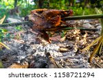 roast chicken grilled in forest ... | Shutterstock . vector #1158721294